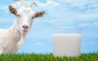 Калорийность козьего молока